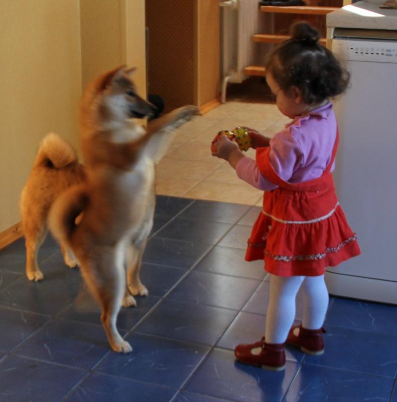 Собака и ребенок.jpg