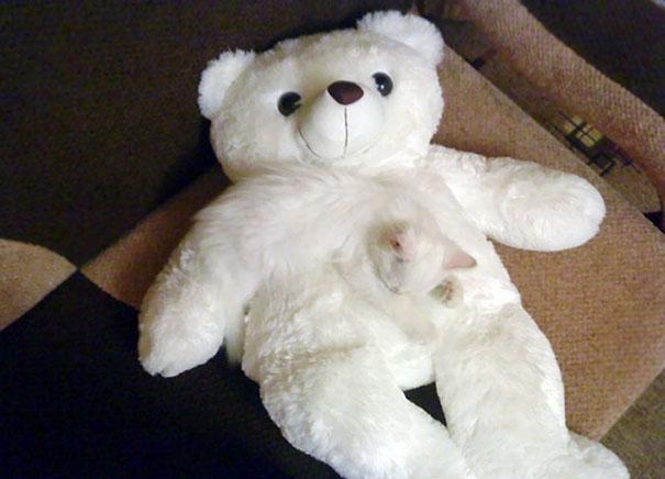 Мишка, плюшевый мишка… кошка, плюшевая кошка…