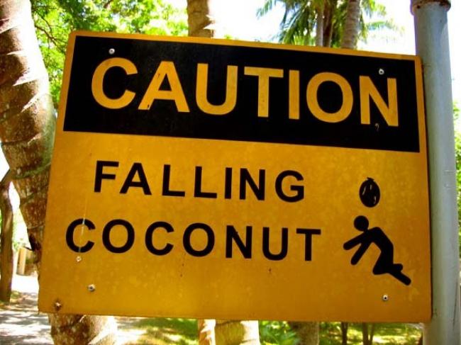 © photobucket.com  Осторожно: падающие кокосы.  Впрочем, погода запросто сделает тоже само