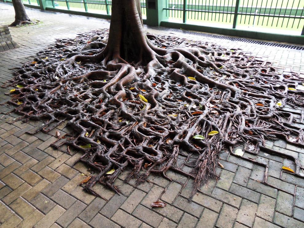 5. Борьба дерева и бетона:
