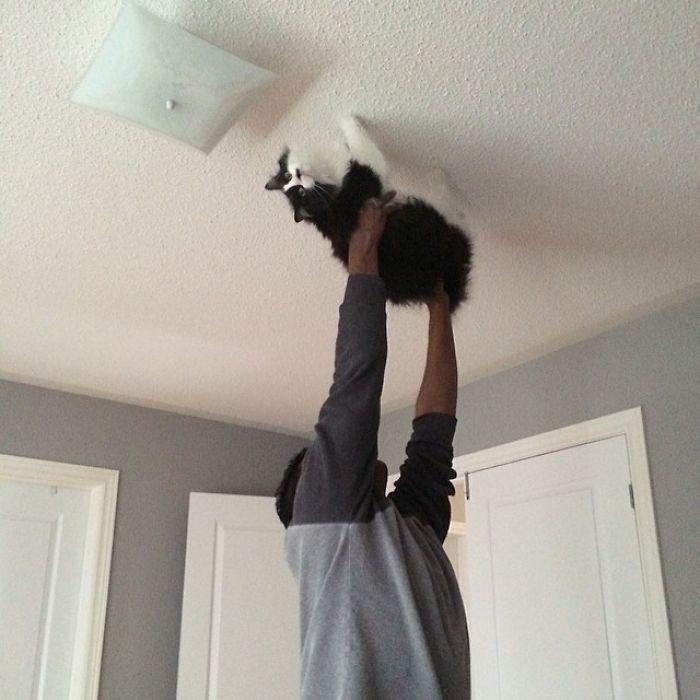 Увидела как-то, как наш папа учит кота ходить по потолку, называя его «Кот-паук».