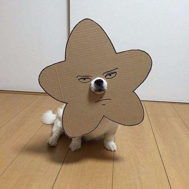 Японка вырезает для своей собаки забавные костюмы из картона (8 фото)