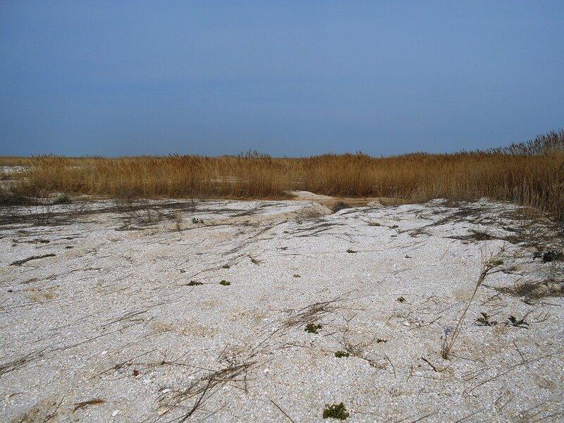 Пески и камыши ... DSCN1716.JPG