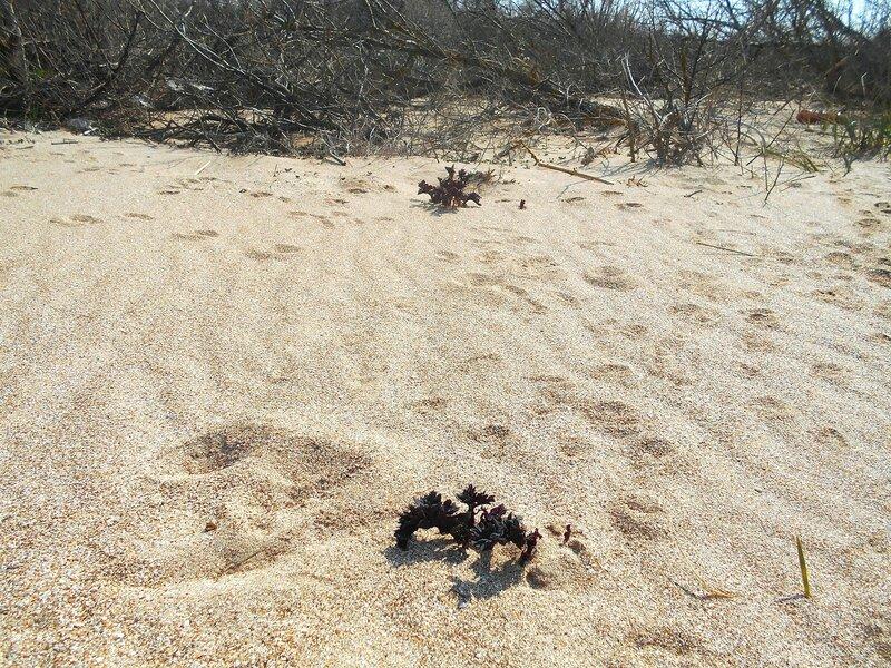На песке ... DSCN1726.JPG