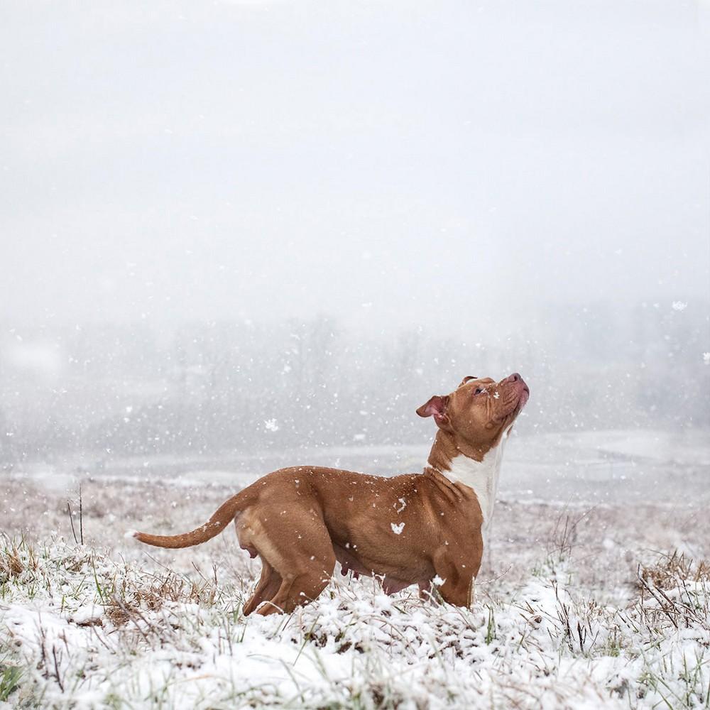 Американский фотограф делает снимки бродячих собак, спасая их от смерти