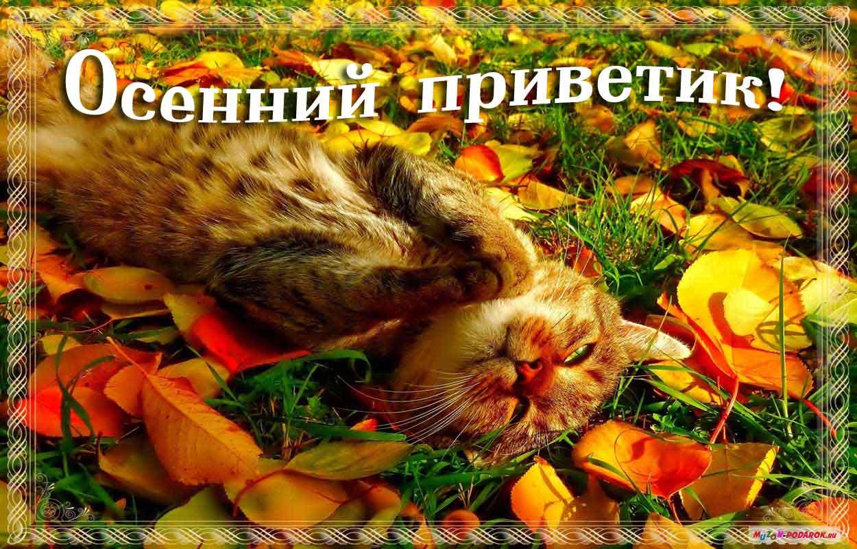 Открытки. Осенний приветик! Котенок в листве открытки фото рисунки картинки поздравления