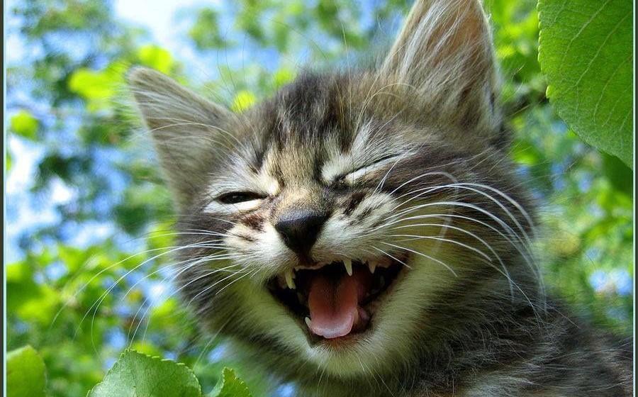 Международный день улыбки. Смеющийся котенок