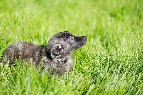 Боб собака из приюта догпорт