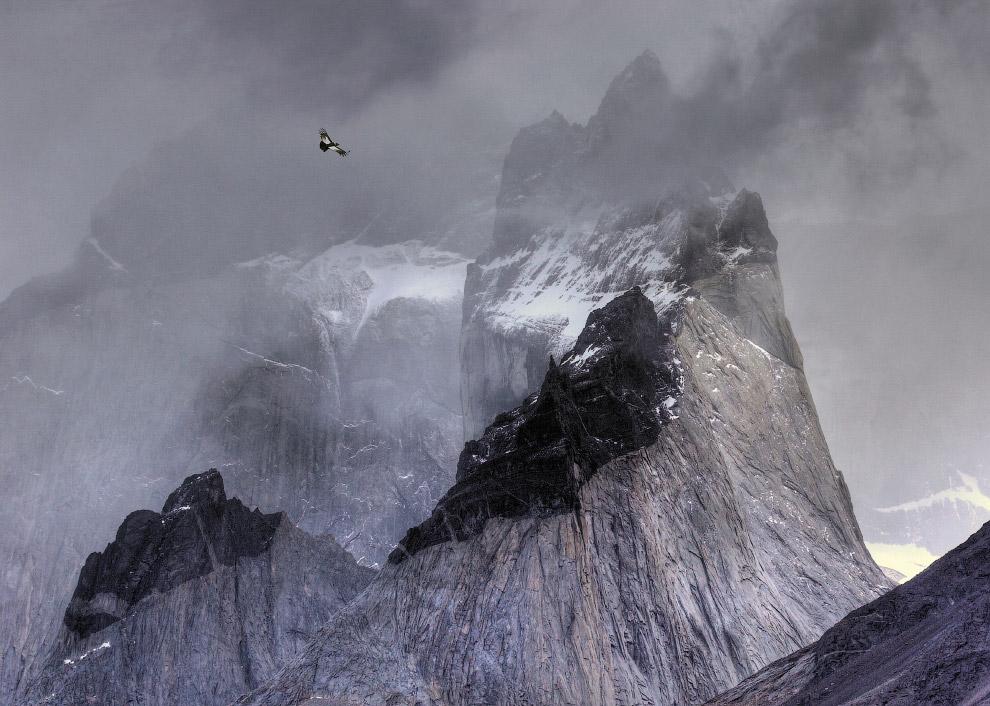 8. Баклан сушит крылья в лондонском Гайд-парке. (Фото Tom Hines | 2017 Bird Photographer of t