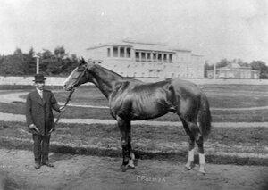 Лошадь Грымза.