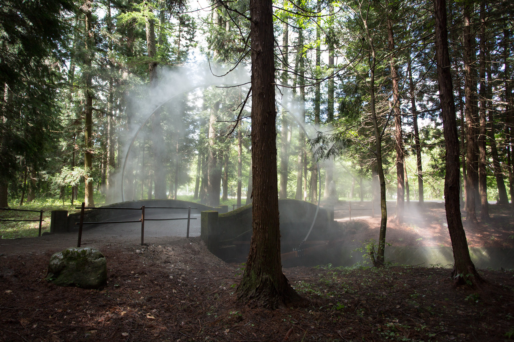 Mystical Arc in the Forest by James Tapscott (4 pics)