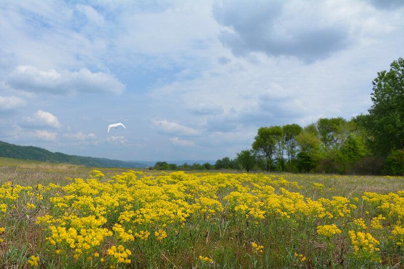 Где я нарвал полевые цветы