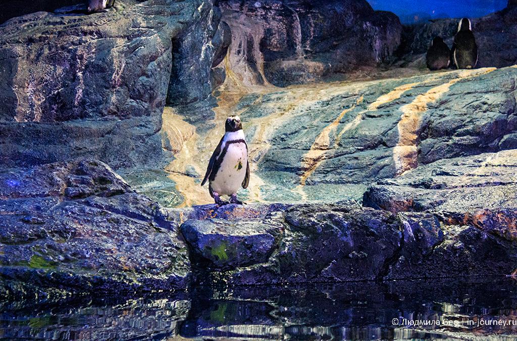 пингвин в океанариуме