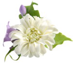 MR_Flowers0413.png