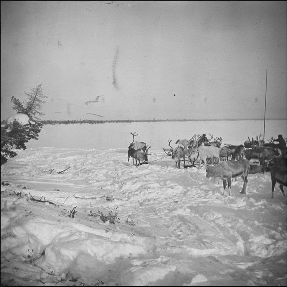 166. Олени и сани в снегу