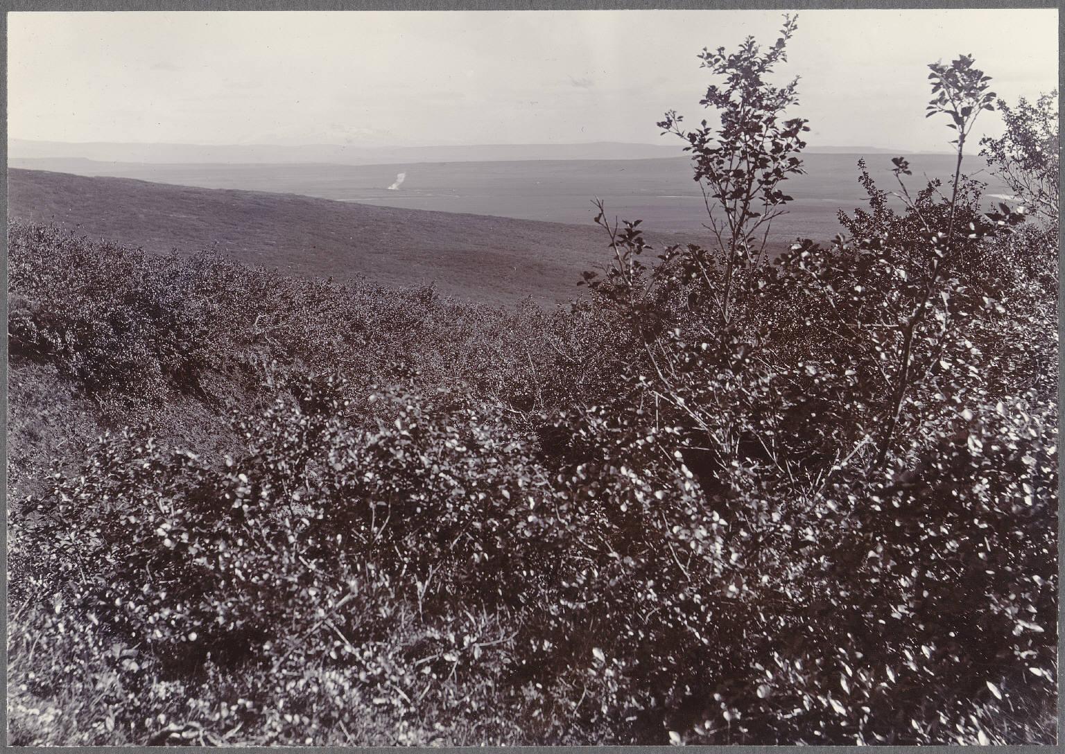 Леса возле Эфстидалура