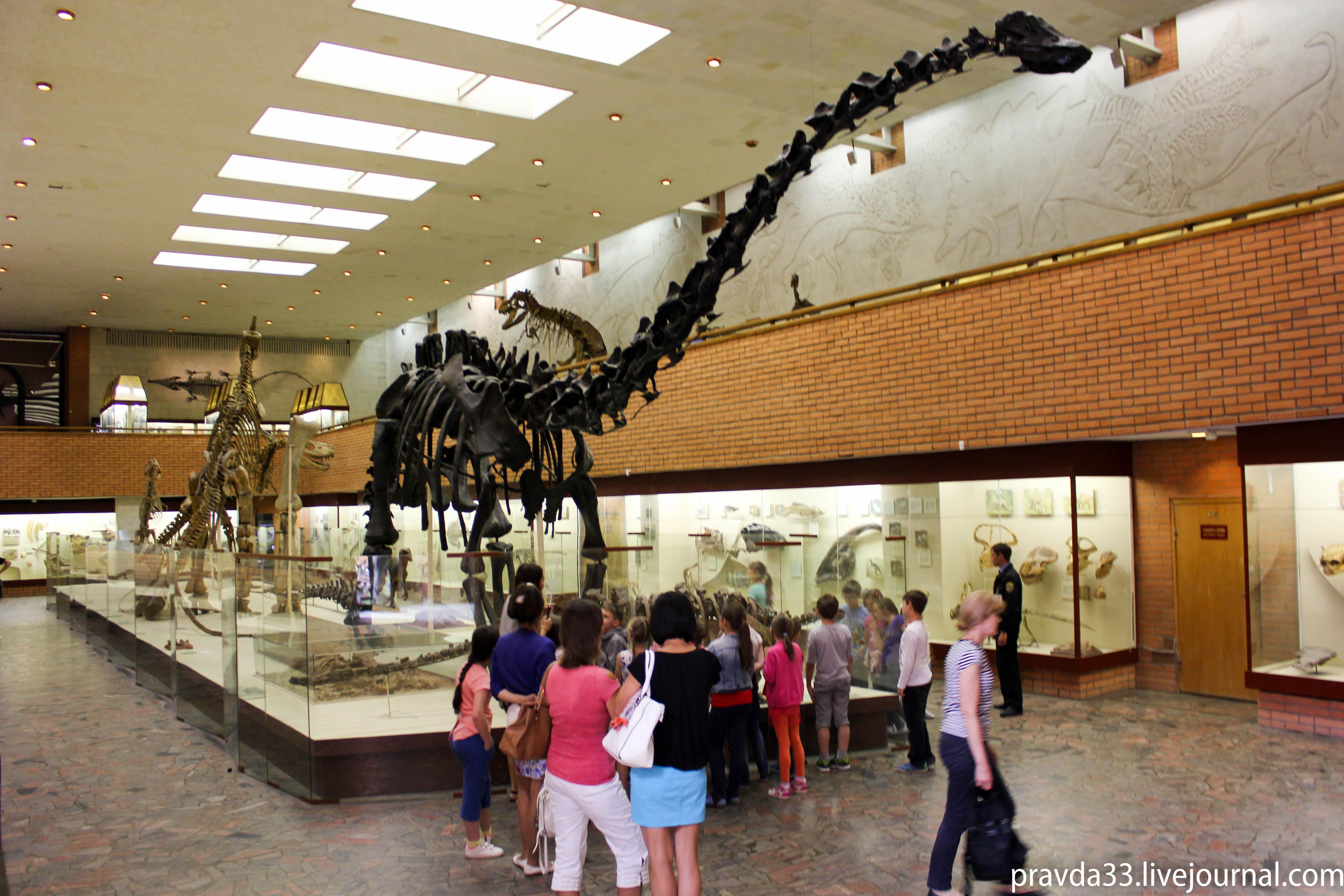 Музей палеонтологии-53.jpg
