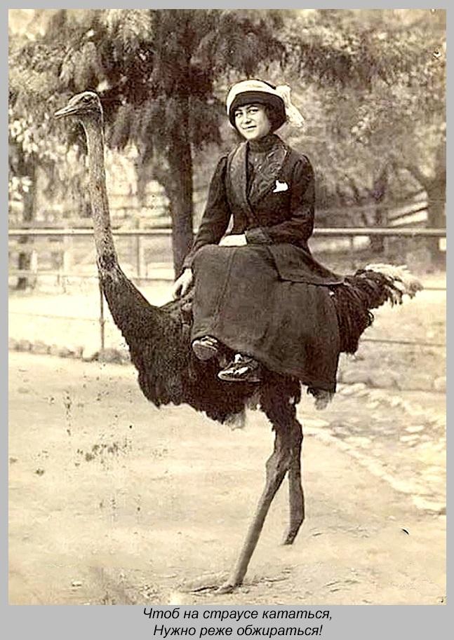 Чтоб на страусе кататься, нужно реже обжираться.(900 с подписью и рамкой)