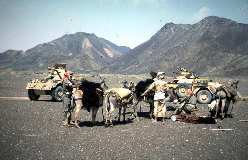 Ferrets & camel train