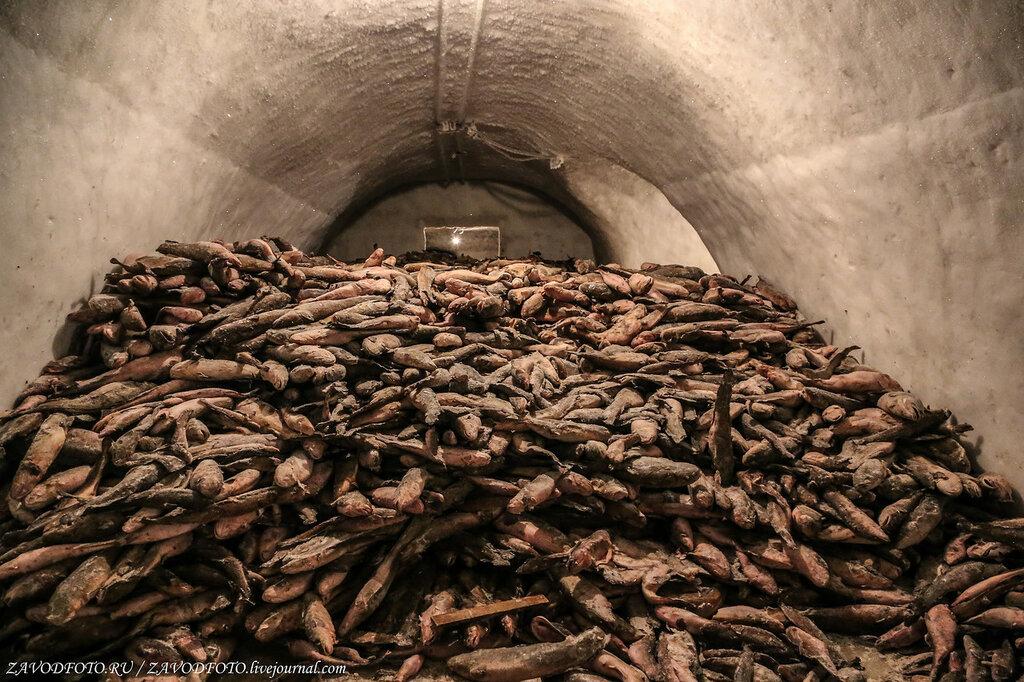 Сколько рыбы было произведено в России в 2020 году РЫБОПЕРЕРАБАТЫВАЮЩАЯ,ПИЩЕВАЯ
