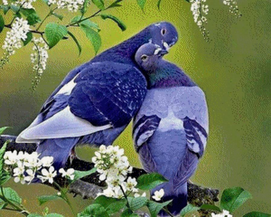 Открытка. С днем поцелуев! Голуби целуются на ветках черемухи! открытки фото рисунки картинки поздравления