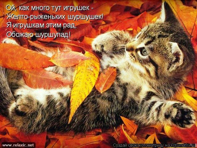 Открытки. Яркой осени! Котенок в листве