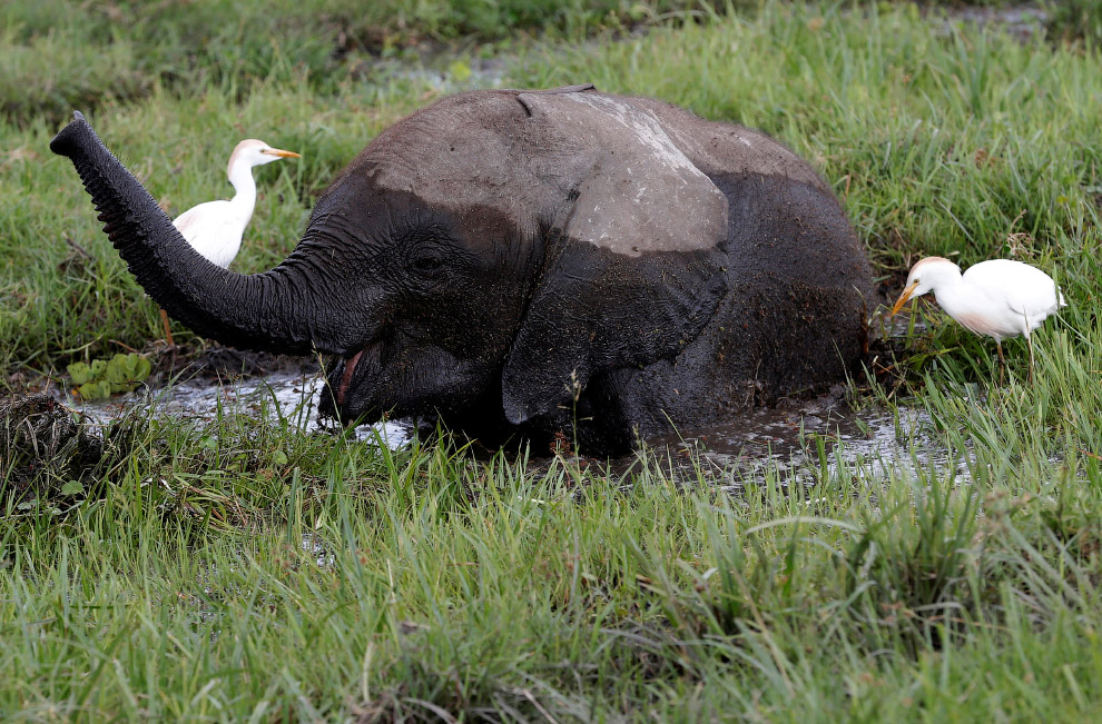 9. Египетская цапля и буйвол. 10. Закат Национальном парке Амбосели.