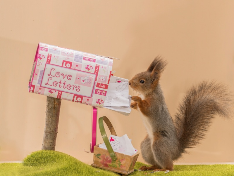 © Geert Weggen/Solent News/REX/Shutterstock   «Просто прячу орешки вразные интересные штук