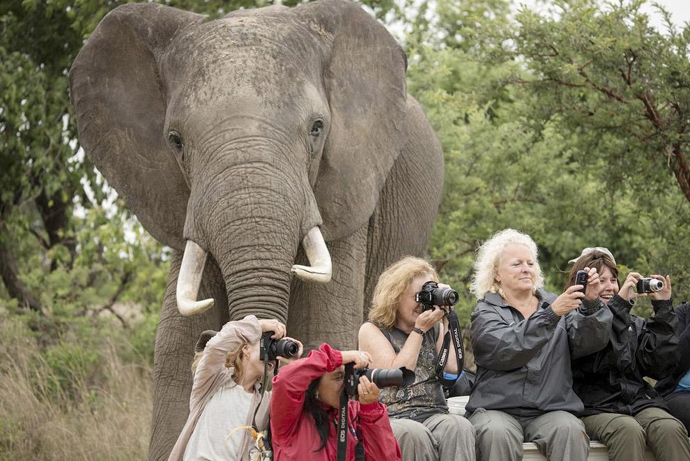 9. Фотограф снимал пейзажи южной оконечности Южной Африки, когда внезапно ниоткуда вылез в кадр