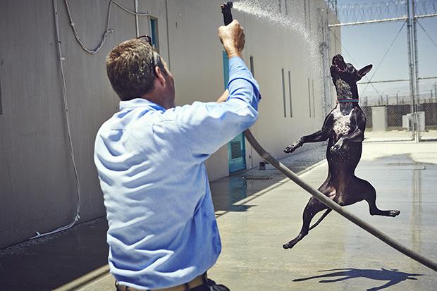 Программа должна была подготовить собак к получению «Сертификата законопослушного пса» (Canine Good