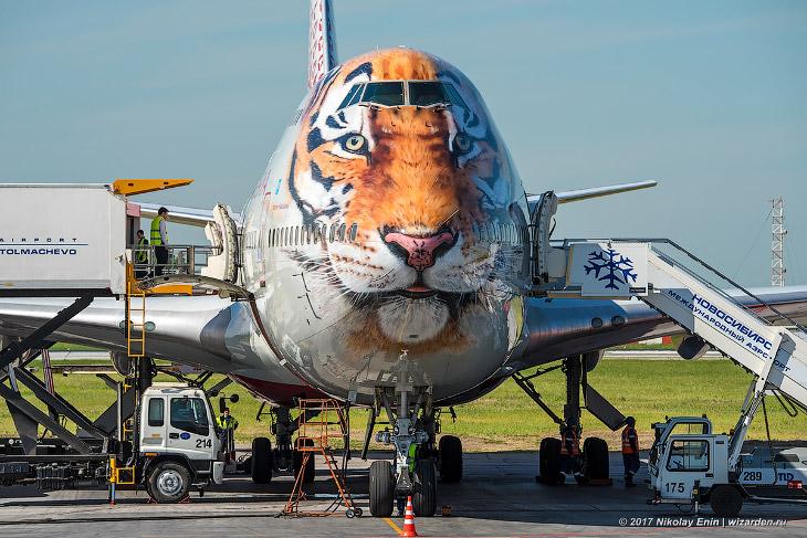 1. «Тигролёт» прилетел в Новосибирск рейсом FV 5646 из Сочи. Рейсы будут выполняться по понедел