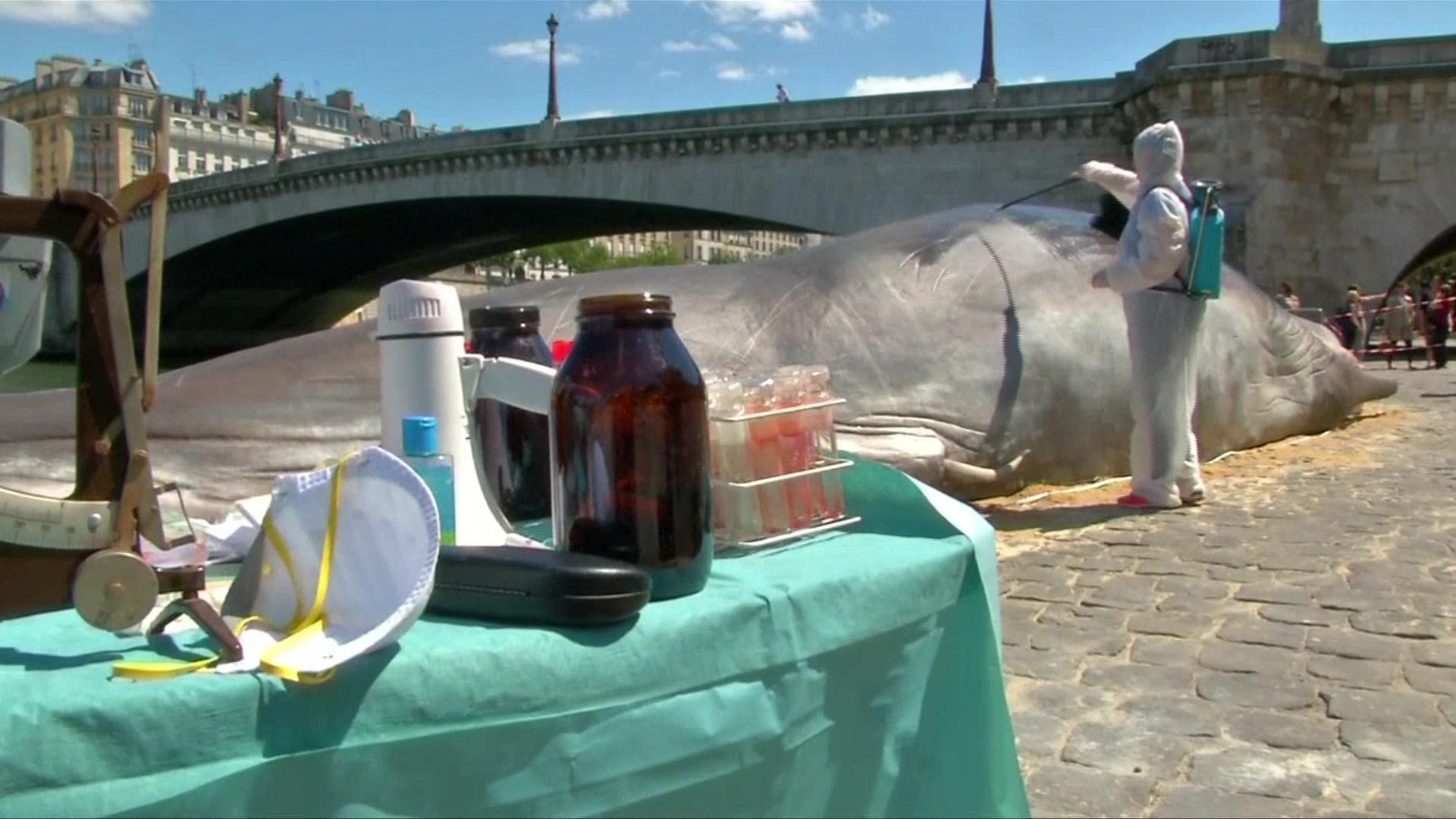 Некоторые из прохожих, встретивших кашалота, сообщили , что статуя даже пахла как выбросившийся кит: