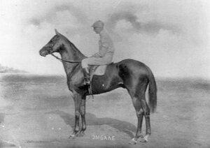 Лошадь Эмбаллэ, победитель великокняжеского приза.