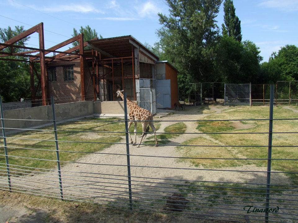 зоопарк-036.jpg