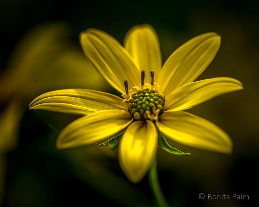 На природе / фото Bonita Palm