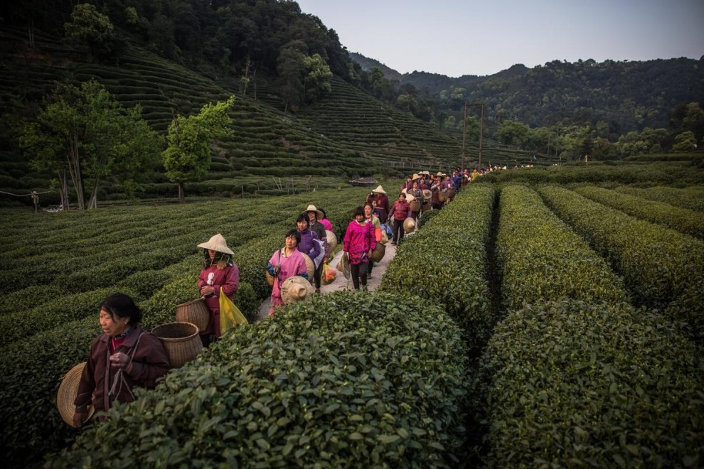 Сезонные работницы стирают одежду после работы на чайных плантациях в окрестностях Ханчжоу в провинц