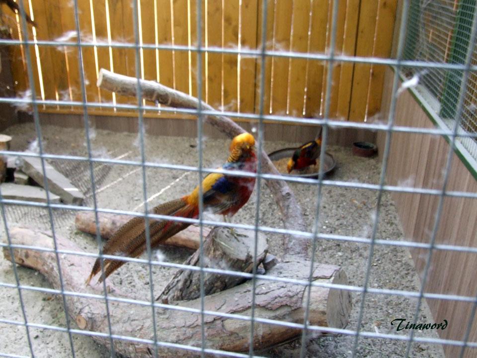 зоопарк-41.jpg
