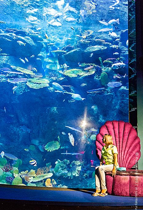 океанариум siam ocean world фото
