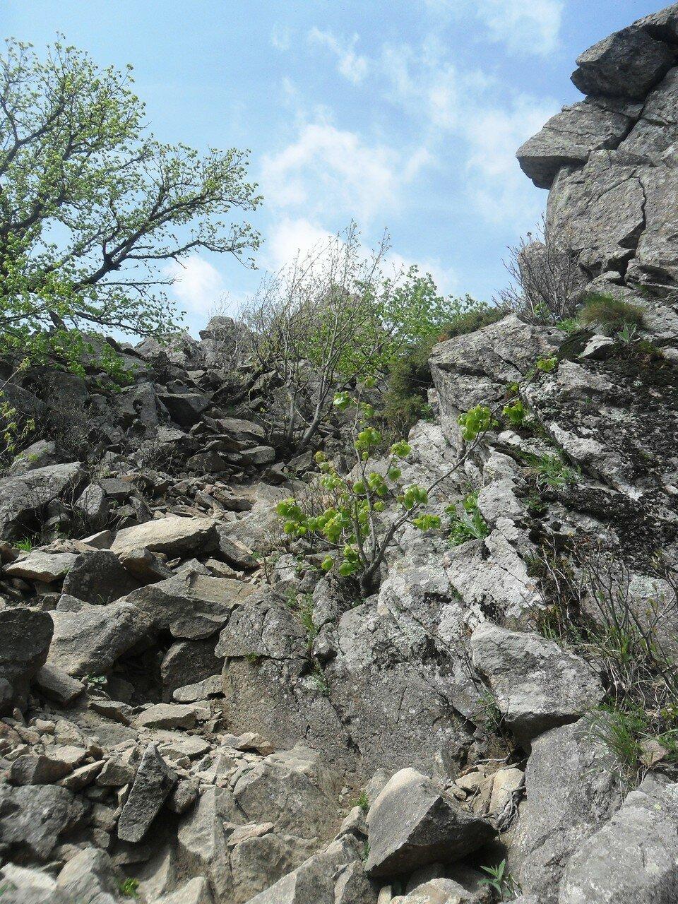 Каменное изобилие... SAM_6739.JPG