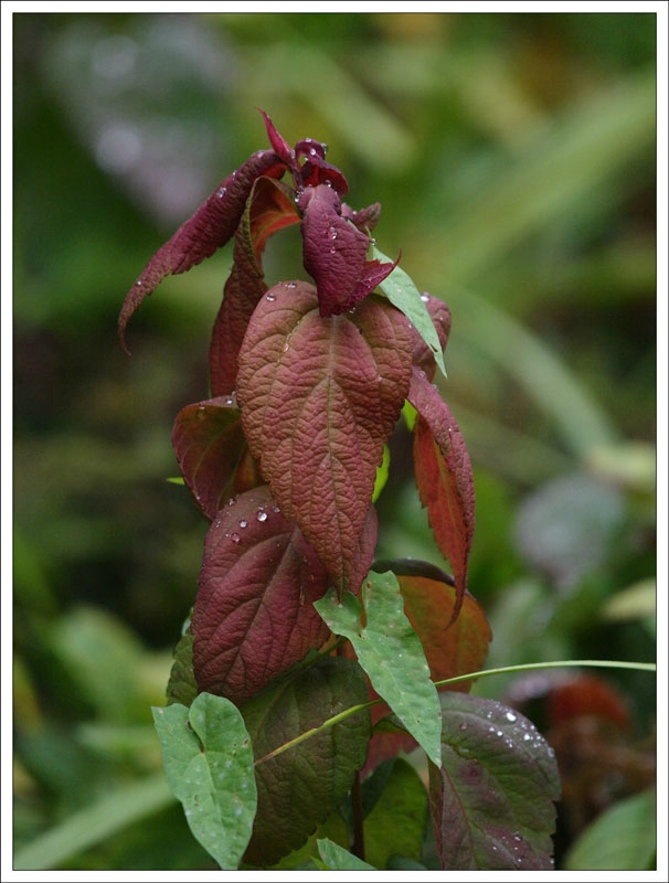 151_Leaf.jpg