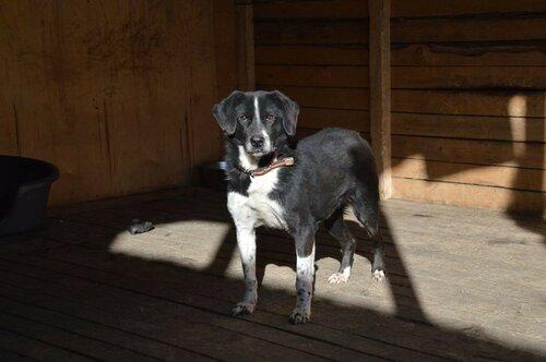 Бакс собака из приюта москва