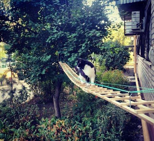 Житель Волгограда специально для своей кошки построил отдельный вход фото