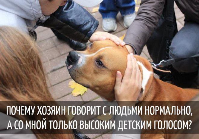Забавные мысли, которые наверняка посещали каждую собаку