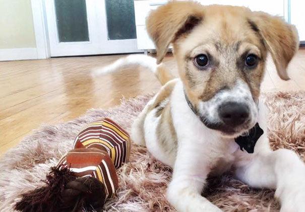 Как спасали собаку, которую жестокие дети облили промышленным клеем и бросили умирать