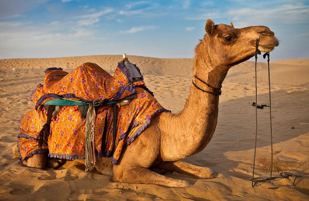 В дополнение к своим турам по «Золотому треугольнику» Индии (Агра, Дели, Джайпур) поезд в этом