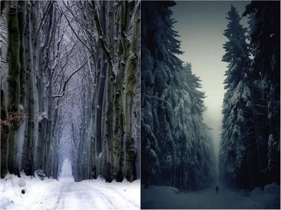 9. Дорога через лес.