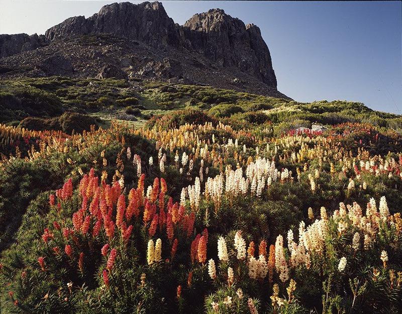 Первобытная красота Тасмании в фотографиях Питера Домбровскиса (16 фото)