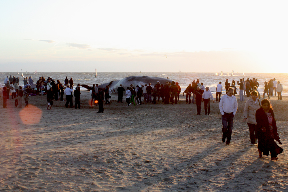 Установка статуи кита в 2013 году в Валенсии.