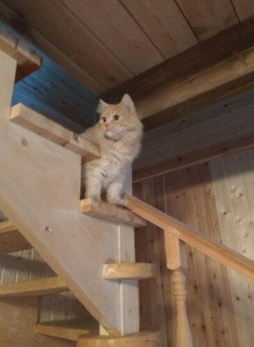 Кот на лестнице.jpg