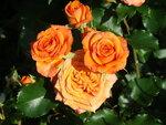 ..маленькие розы..патио...